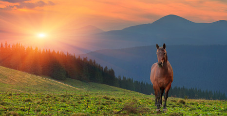 Wall Mural - Summer landscape with horse in the mountains. Sunset