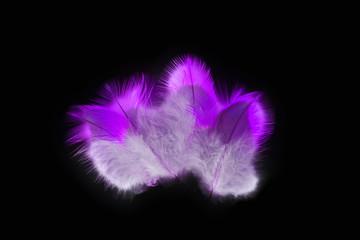 Deko feathers magenta