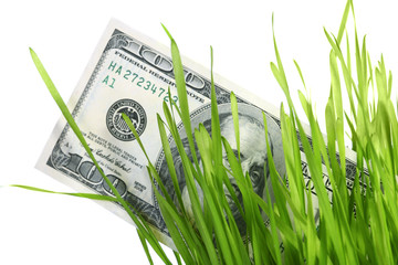 dollars in grass