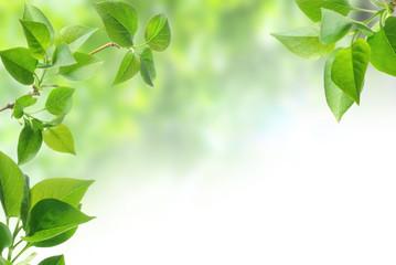 Wall Mural - green leaves