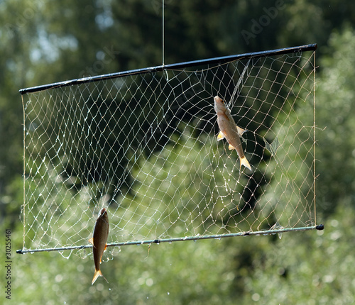 летние пауки про  рыбалки