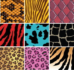 vector skin of differenent animals and snake skin