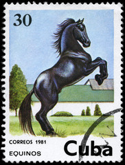 CUBA - CIRCA 1981 Horse 30c