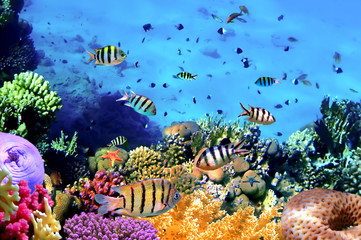 Deurstickers Onder water Beautiful Corals and Fish