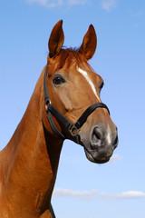 Лошадь на смотровой площадке