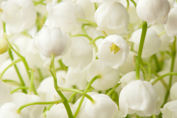 Wall Murals Lily of the valley nowdrop