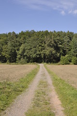 bosque 02