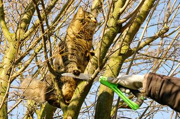 Baum verschneiden mit Katze - tree pruning and cat 01 Wall mural
