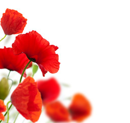 Türaufkleber Mohn summer scene, red poppies isolated on white