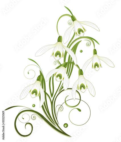 schneegl ckchen ranke flora fr hling blume. Black Bedroom Furniture Sets. Home Design Ideas