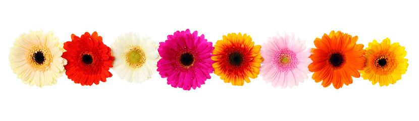 Frühlings Blumen - Blumengirlande freigestellt