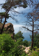Forest on mountains hill, Aya cape, Crimea