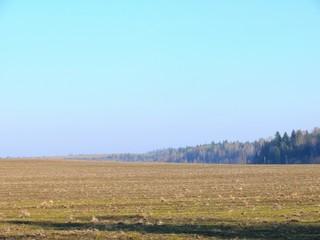 Stubble field. Sky.