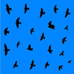 Flying birds background.