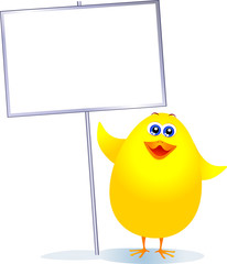Pulcino con cartello bianco - Chick with blank sign