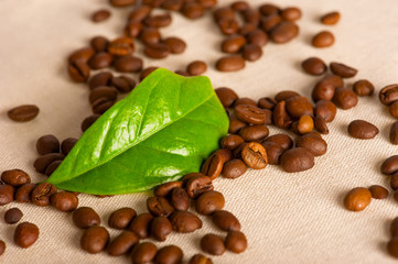 Coffee beans and green leaf of coffee plant on linen canvas