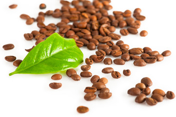 Coffee beans and green leaf of coffee plant on white