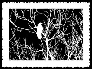 silhouette bird on black background