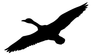 silhouette flying ducks on white background
