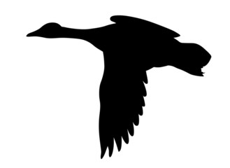 silhouette flying ducks on white background