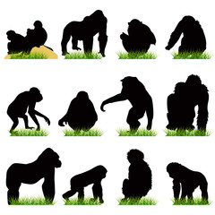 Monkeys silhouettes set