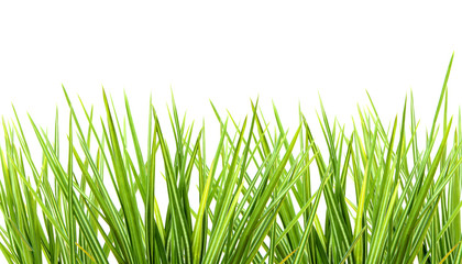 Bunch of grass on white background