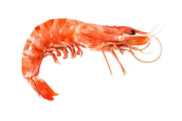 tiger shrimp isolated on white