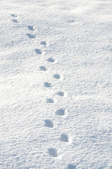 雪原に付いた動物の足跡