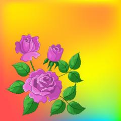 Flower background, roses