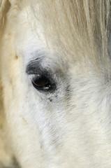 Deurstickers Ijsbeer poney blanc