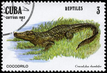 CUBA - CIRCA 1982 Alligator