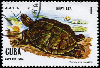 CUBA - CIRCA 1982 Tortoise