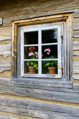 Old wooden window with a muscatel in blossom