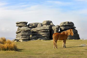 Dartmoor Pony at Combestone Tor