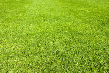 Green grass in spring. Natural background.