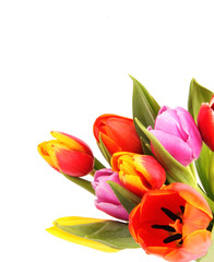 Bouquet of tulips, isolated on white background