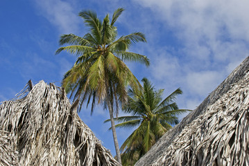 Palm trees with thatched roofs