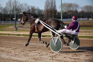 Harness Racing.Trotting horse.