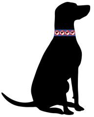 Hund mit Flohhalsband