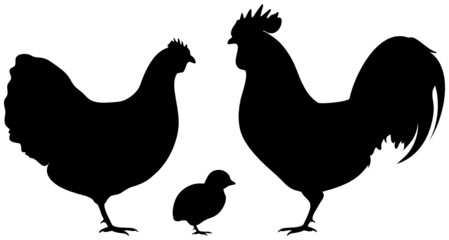 Rooster, Hen & Chick Black
