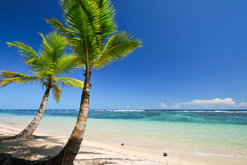 Two Palm Trees on Deserted Caribbean Beach