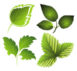 Vector green set of leaves