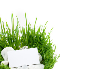 Grass and stones on a white background