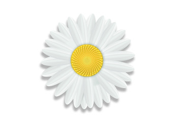 margueritte-Fond Blanc
