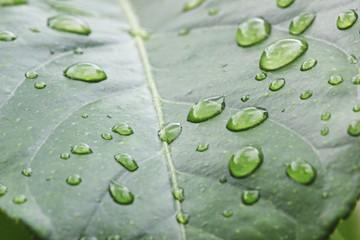 Fototapete - Regentropfen auf Blatt