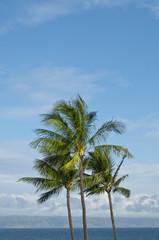 Palm Trees on the horizon