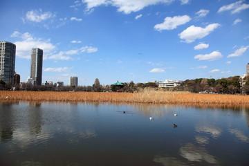 春の不忍池 (東京・上野公園)