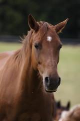portrait cheval-2