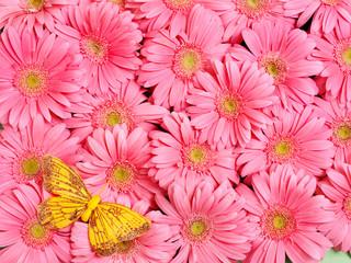 Background of  flower.