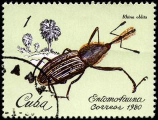 CUBA - CIRCA 1980 Weevil